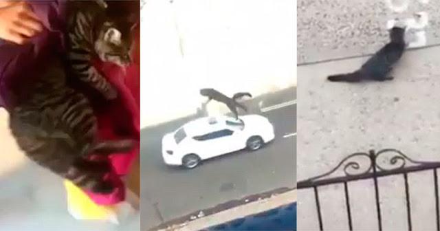 Девушка для прикола выбросила кошку с третьего этажа!