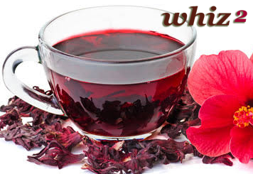 How does hibiscus tea help in weight loss?