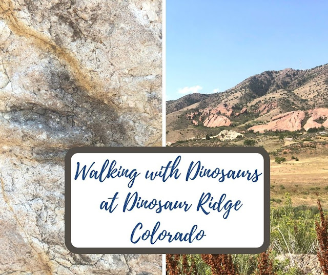 Walking with the Dinosaurs at Dinosaur Ridge  Viewing Fossils in Morrison, Colorado