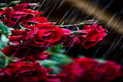Kumpulan contoh puisi bertema tentang cinta dan rahasia