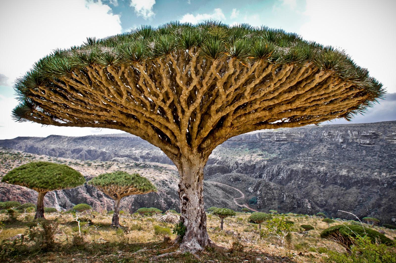 Tumbuhan Teraneh Di Dunia Images Hewan Lucu Terbaru