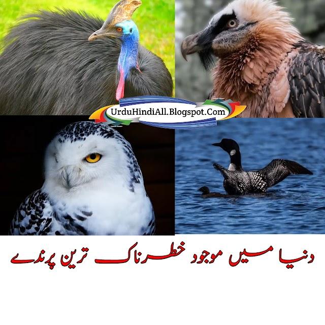 خطرناک ترین پرندے - Most Dangerous Birds - Urdu