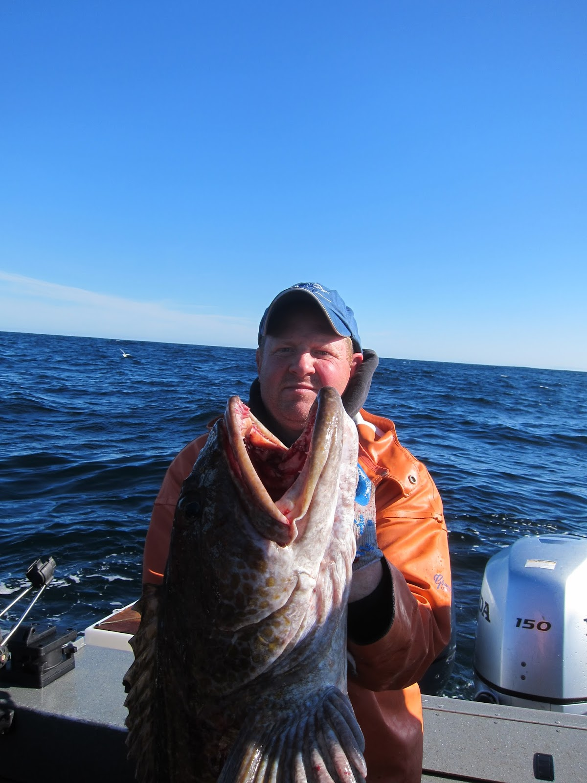 Todds extreme fishing giant westport lingcod and halibut for Todd s tropical fish