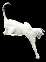 Gato atacando png