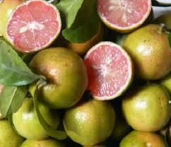 trái chanh đào
