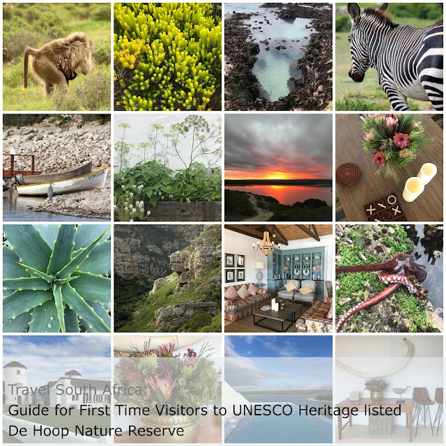 Guide for First Time Visitors to UNESCO Heritage listed De Hoop Nature Reserve The Touristin