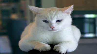 نصائح لوقف الرش من القطط