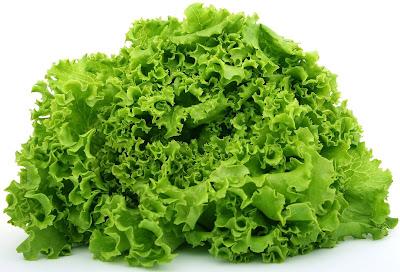 daun selada