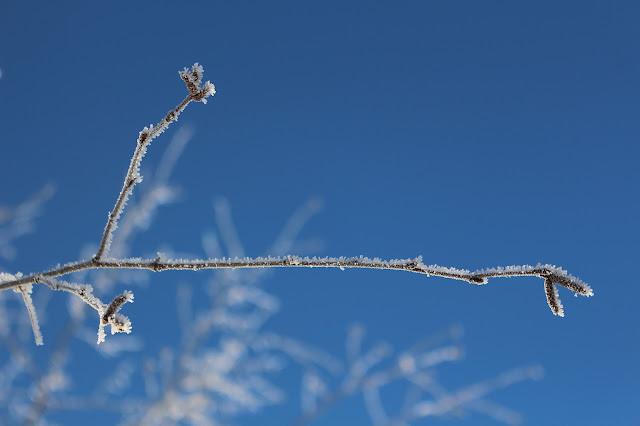 #vinter #sol #frost #hälsingland #himmel