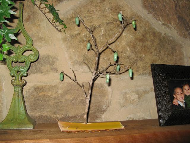 Danaus plexippus Tree