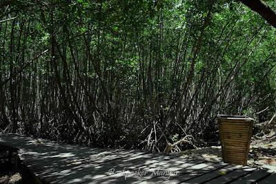 Manjaga Hutan Mangrove Taman Hutan Raya Ngurah Rai Bali dari sampah - Backpacker Manyar