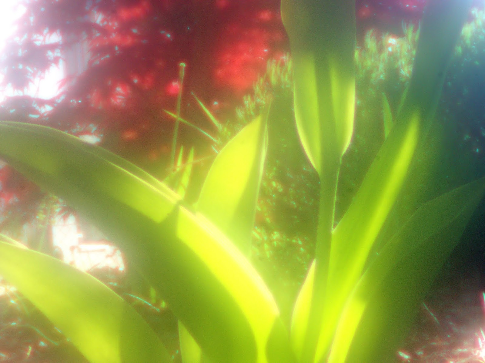 World Pinhole Photography Day 26.04.2020 - Mein Beitrag