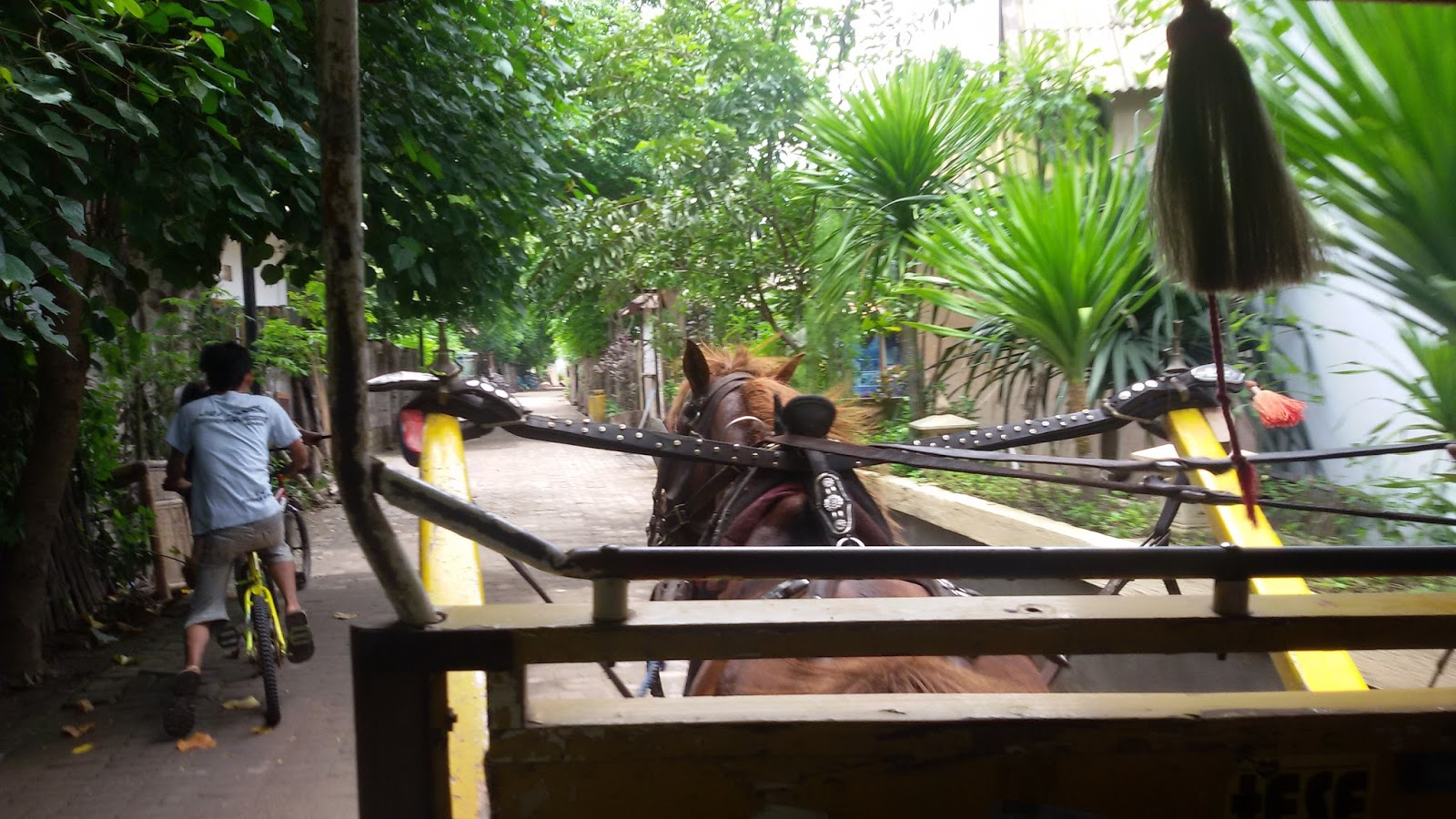 horse carriage in gili