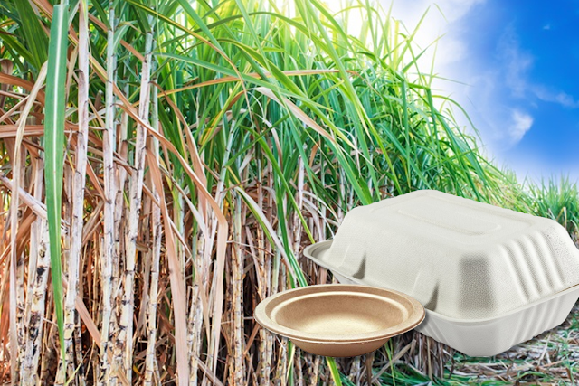 Bagasse sugar cane plastic replacement