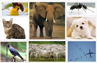 Fantastico things which we learn from other animals in hindi