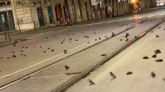 Dead birds rain on new year in Italy