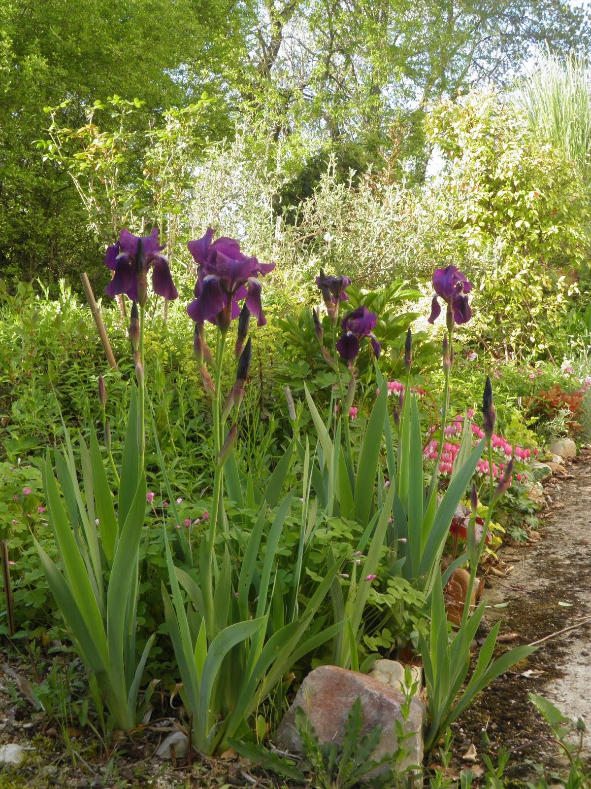 Mon Jardin En Avril mon jardin quercynois: avril 2019