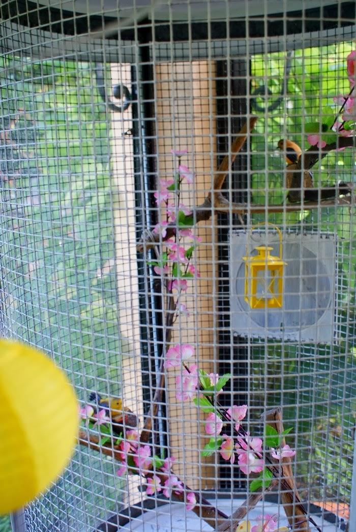 shabbychic birdcage home interiors diy
