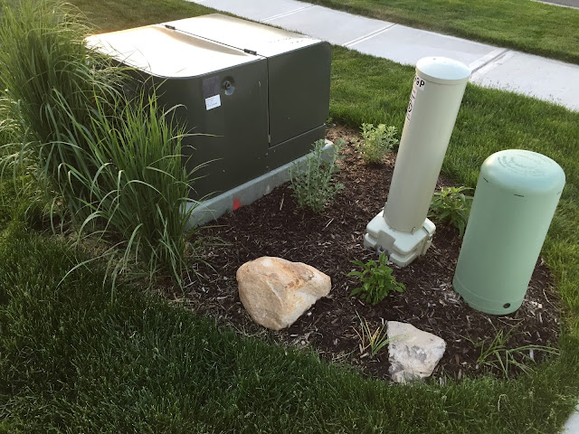 plants around power box