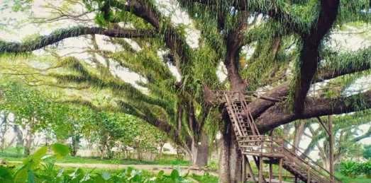 Wisata Banyuwangi yang Paling Populer