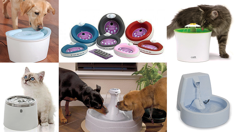 Buy Pet water fountain in Singapore