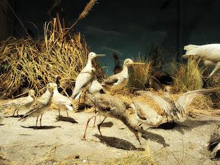 As Aves no Museo de La Plata, Argentina