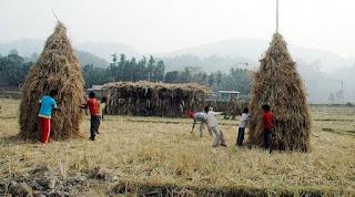 Bihu Dance :Assam | Assamese Bihu | Bihu Festiva l Magh Bihu 2020 |Rongali Bihu | Bhogali Bihu
