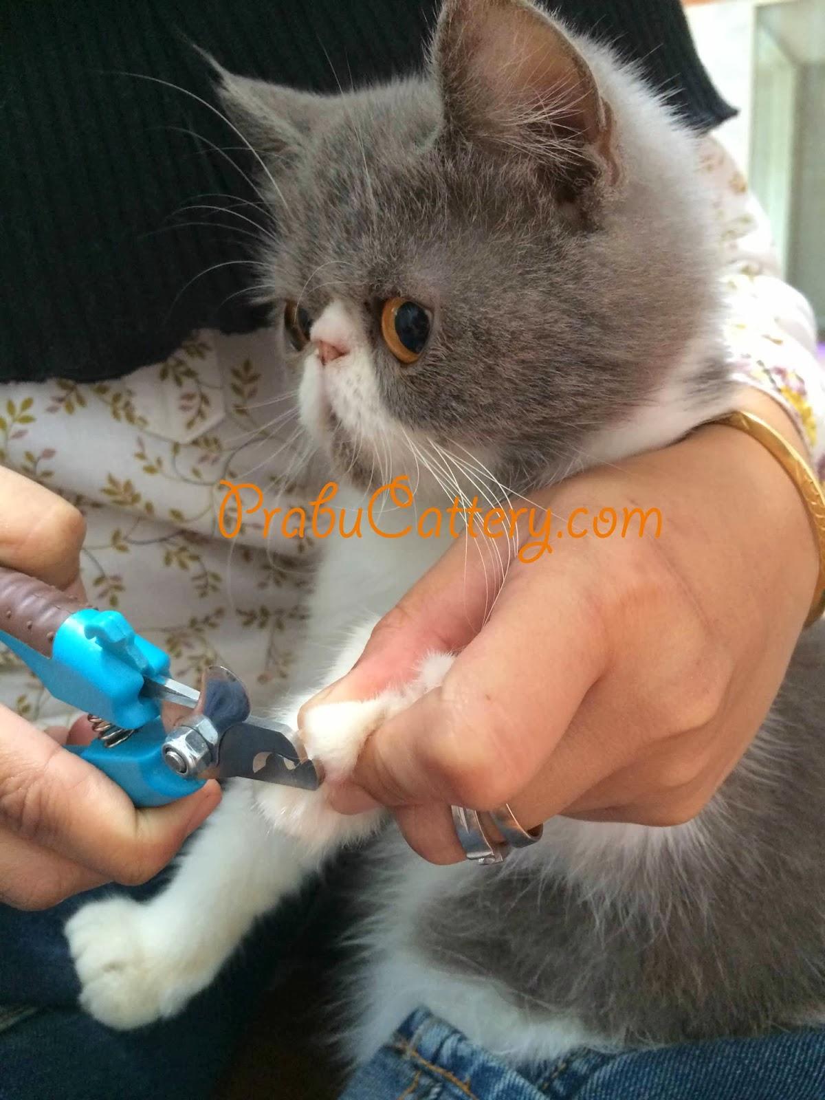 Macam-Macam dan Cara Mengatasi Penyakit Pada Kucing