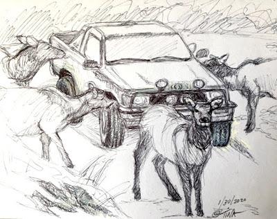 """""""Salt Lick"""" elk sketch 5 ©2020 Tina M.Welter"""