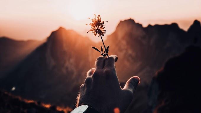 Fotografia, Mão, Flor, Pôr do Sol, Natureza