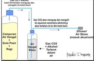 cara membuat co2 padat , takaran co2 ragul , cara membuat co2 diy sitrun , cara membuat co2 diffuser , cara membuat co2 alami , cara menyebarkan co2 di aquascape , cara membuat co2 diy ragul , ragul co2