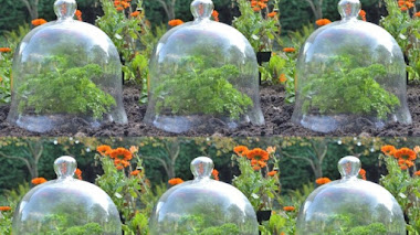 Campanas victorianas o cloches para el jardín