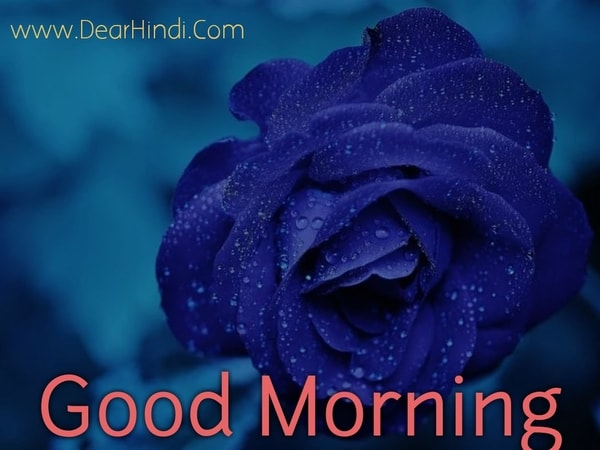 good morning rose flowers images for whatsapp pictures