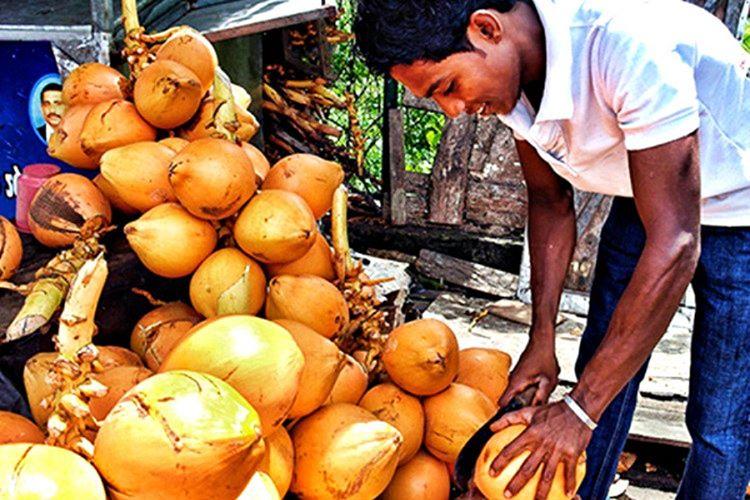 Ada halkı hindistan cevizlerini yemek yerine çoğu zaman dilek dilemek için kullanır.