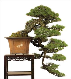 bonsai cascade