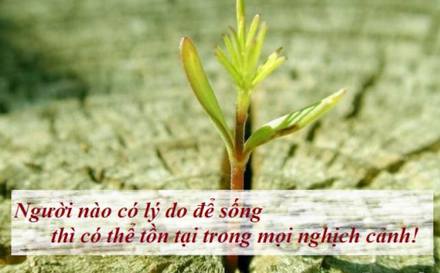 Giống như hoa dại, hãy học cách sinh tồn trong mọi hoàn cảnh khắc nghiệt nhất, ngay cả khi người đời cho rằng bạn không thể.