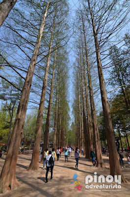 WINTER SONATA AT NAMI ISLAND AND PETIT FRANCE Blog
