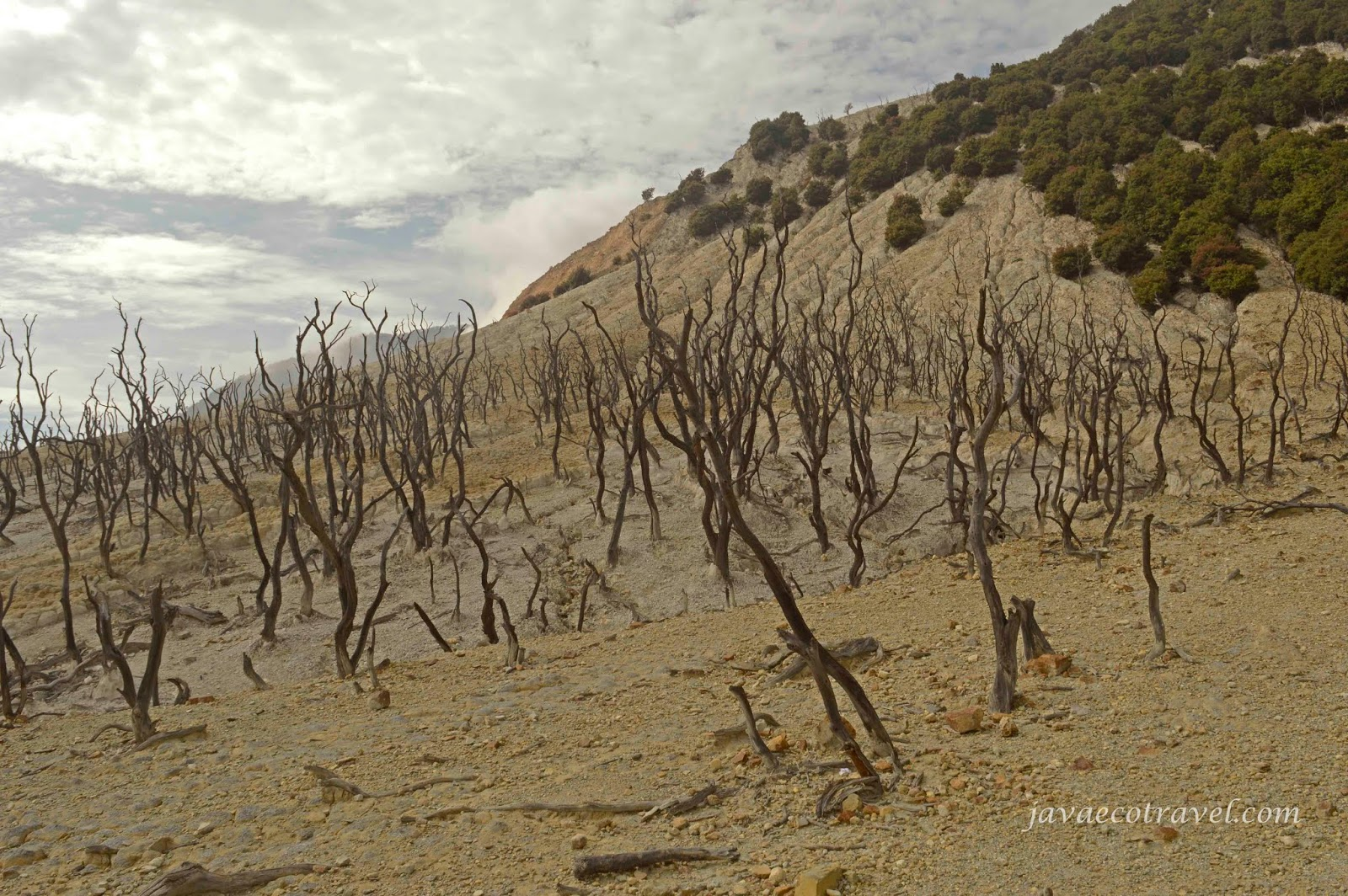 Dead Forest Papandayan