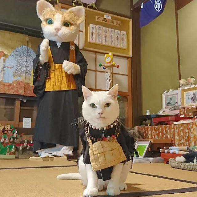 Koyuki - một cô mèo cái lông trắng, hiện tại chính là trụ trì đời thứ 3 của Nyan Nyan Ji.