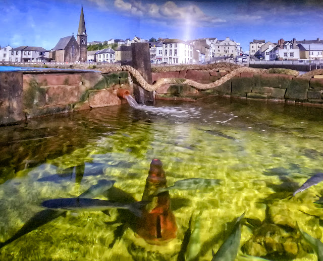 Photo of the dogfish and ray pond in front of a photograph of Maryport