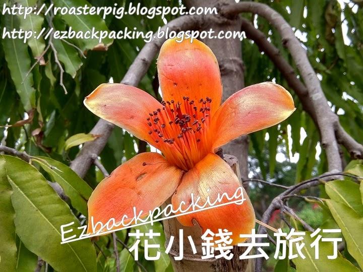 橙紅木棉花