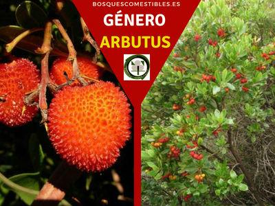 Lista de arboles en la Península del Género Arbutus