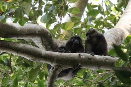 5 Jenis Satwa Endemik Kepulauan Togean Yang terancam Punah