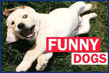 Hunde Videos zum Totlachen