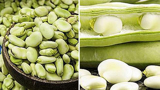 Kacang Flageolet