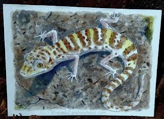 Banded Gecko