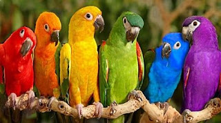 Papagalul în simboluri, superstiţii şi vise