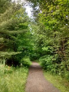 Sentier Bromont arbres boisé