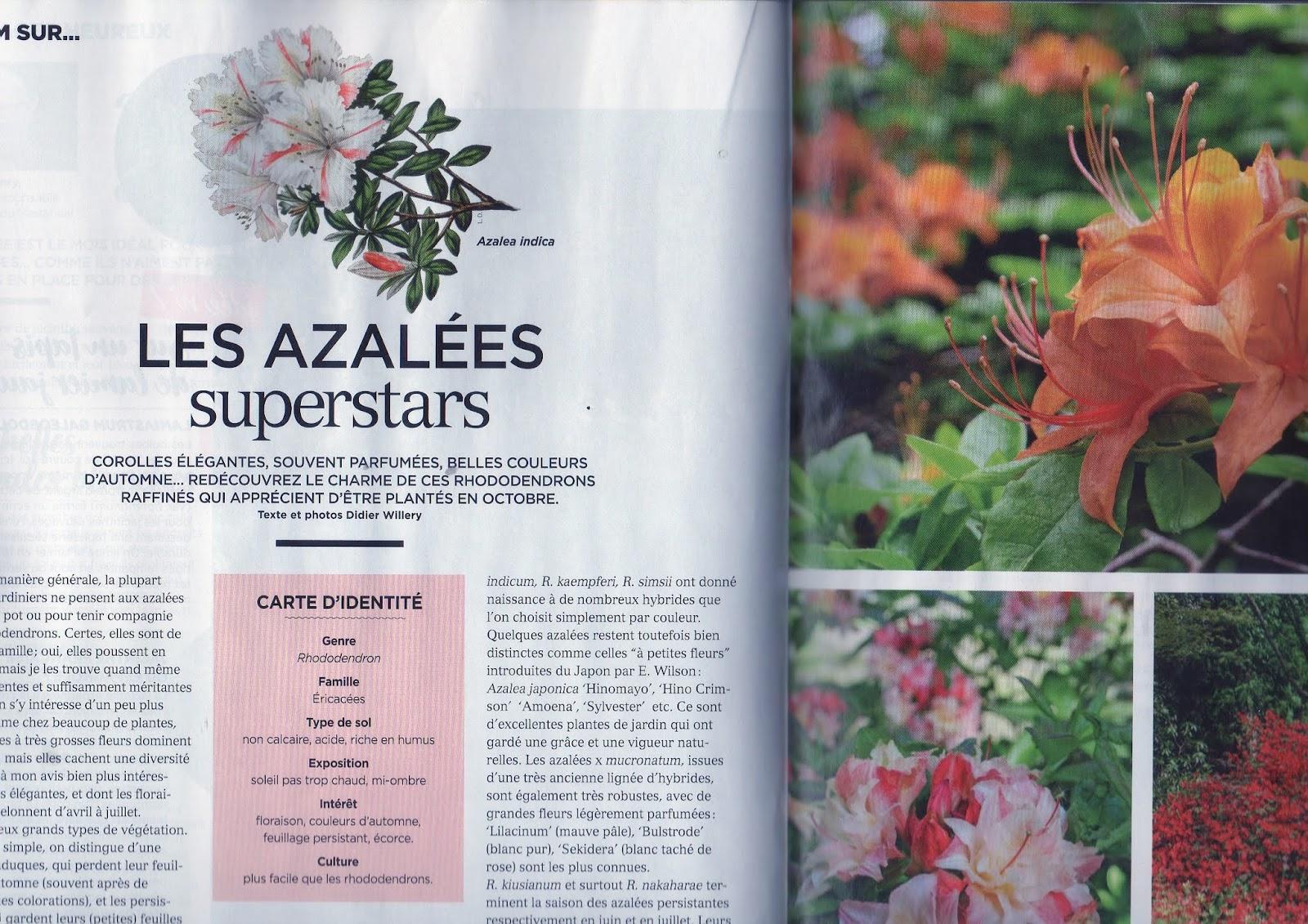 Dingue De Plantes Decouvrez Les Azalees