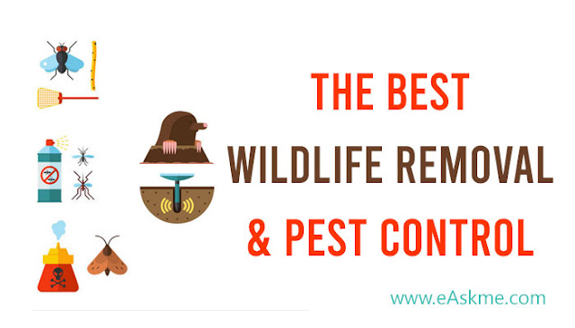 Six Pointers for Selecting the Best Wildlife Removal & Pest Control Company: eAskme
